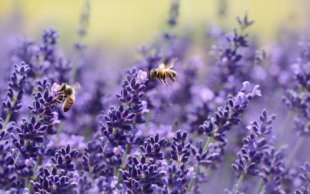 Honey Bees: Why They Are In Decline and 6 Easy Ways to Help Them